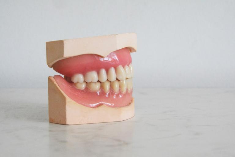family orthodontist in palm harbor